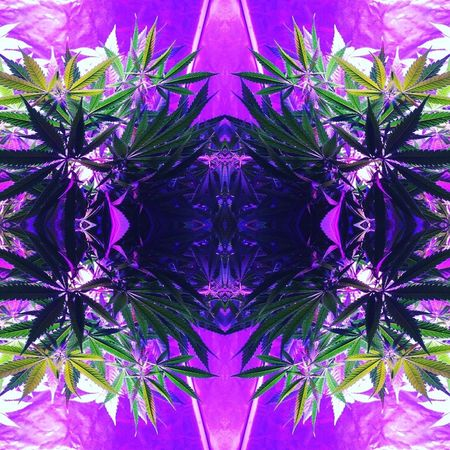Purple Full Frame Symmetry Backgrounds Abstract No People Tribal Gypsy Sacred Art Sacredholisticarts Digital Art Multimedia Prideandjoy Mandala Cannabis.👌🍁 Cannabis Cannabis Plant Cannabiscommunity Cannabis Art EyeEmNewHere