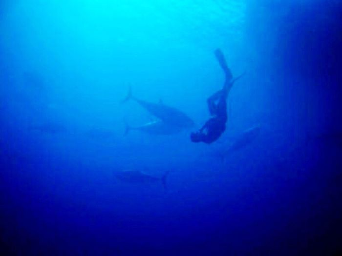 Diving Underwater Water Sea Redtuna Tuna Freedom Freediving Blue Scuba Diving Nature UnderSea Swimming