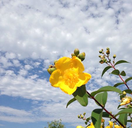 Sun Is Shining In The Sky Lyrical Madness Yellow Flower Blue Sky Blue And Yellow Blue Sky And Clouds Beauty In Nature Keeping It Simple Nature_collection