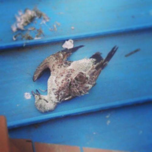 Hay un pájaro muerto en la calley claro que no es una obra de arte,yo se porqué se murió...buscaba su amor(8) Primaveradepraga