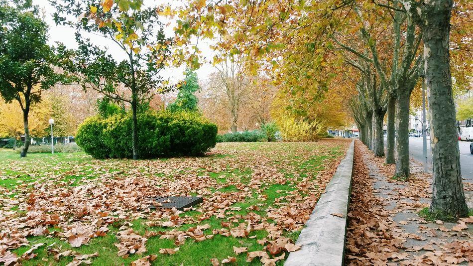 Autumn Nature Trees Green Capital Green Park Beautiful Landscape Vitoria Basque Country