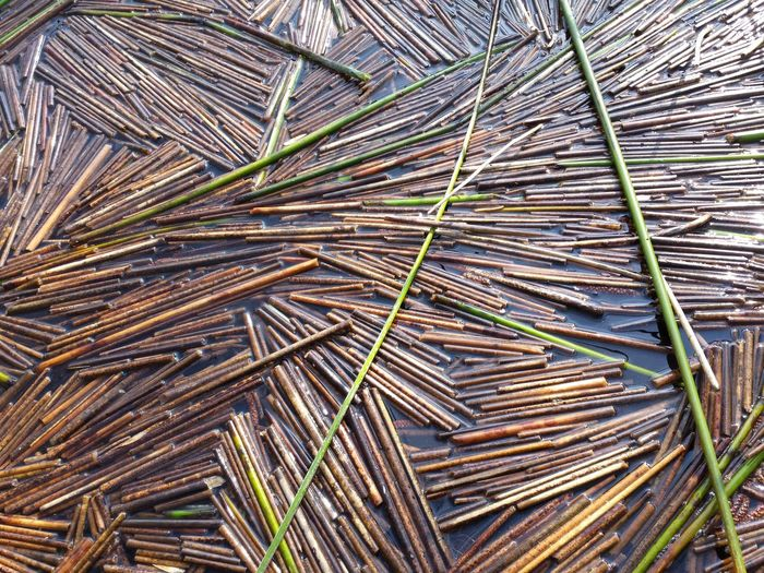 Grass Juncaceae Plant Abundance Backgrounds Bamboo - Plant Bildfolge Close-up Day Large Group Of Objects Nature No People Outdoors Photography Stack Truism Water Swimming Relaxation Blue Sunlight Vacations Tree Real People Outdoors Day People Beach Sky Nature Sea Arch