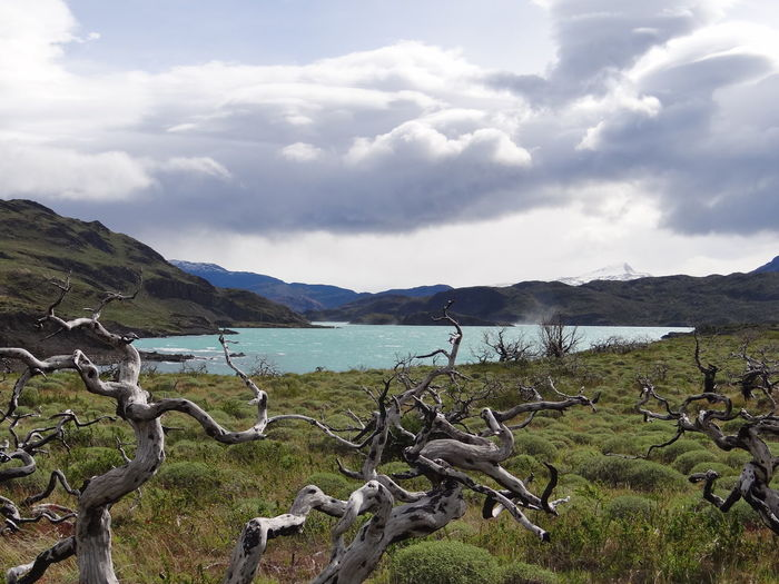 Beauty In Nature Cloud - Sky Day Driftwood Environment Field Idyllic Land Landscape Mountain Mountain Range Nature No People Non-urban Scene Outdoors Patagonia Plant Scenics - Nature Sky Torres Del Paine Tranquil Scene Tranquility Water