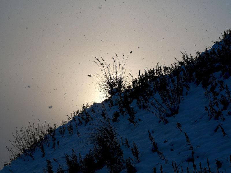 Lookingup Half blue : Somewhere in Nagasaki 2010. Panasonic LUMIX DMC-L10K+ Olympus ZUIKO DIGITAL ED Lens14-42mm Photos(iMac) edit. 2010 Beautiful Day Creative Light And Shadow January Nagasa-Kirei ( ナガサキレイ ) Sihouette  Snow Morning Snowing Day