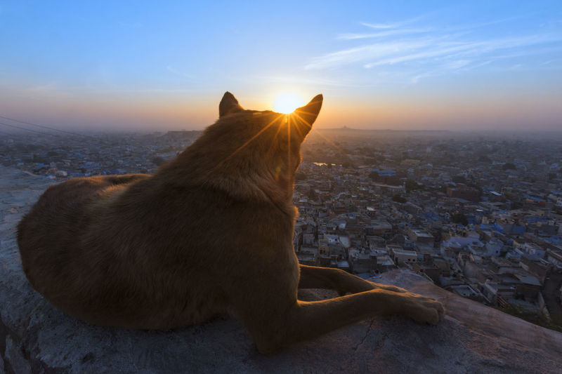 A dog relaxing and watching sunrise from meharangara fort, jodhpur, rajasthan. Beautiful Jodhpur Relaxing Sun Star Animal Themes Beauty In Nature Close-up Day Dog Domestic Animals Full Length Mammal Nature No People One Animal Outdoors Pets Sitting Sky Sunrise Watching Pet Portraits A New Beginning