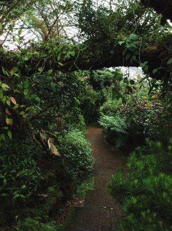 Walking around. Walking Around Royal Botanic Gardens Garden Green Path Trees Greenhouse Glasshouse Exotic