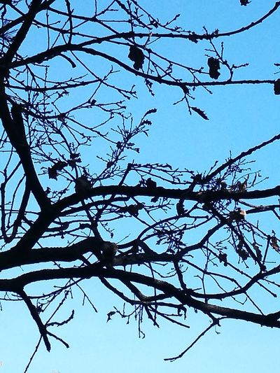 Branch Tree Nature Sky No People Silhouette