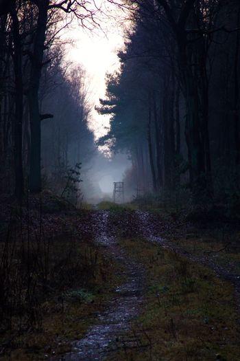 Hochsitz-Nebel/ Tranquility Tranquil Scene Tree Trunk