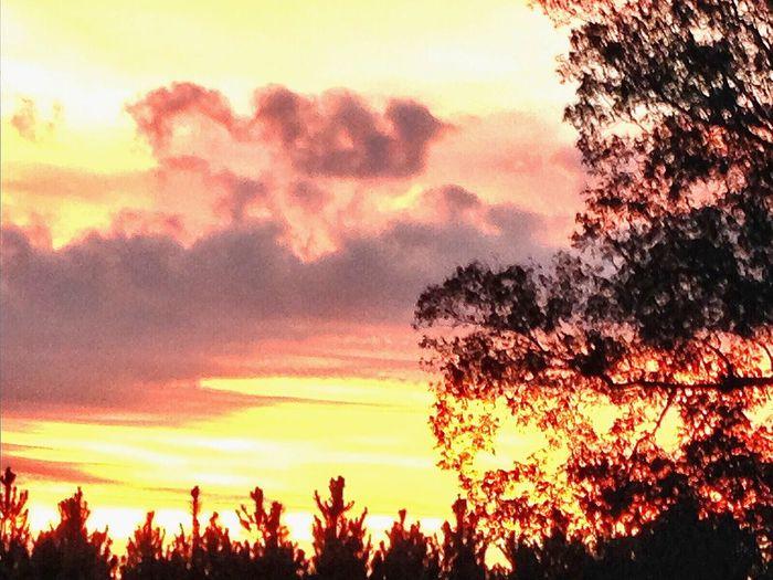 Sunrise purple