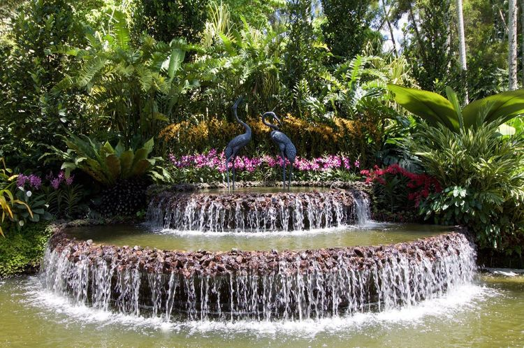 Water Outdoors No People Day Nature Flower Beauty In Nature Tree Statue Bird Flower Head Orchids Park - Man Made Space Orchid Blossoms Summer Fountain Singapore Water Fountain Freshness