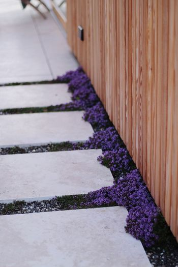 Close-up of purple flowering plants on footpath by building