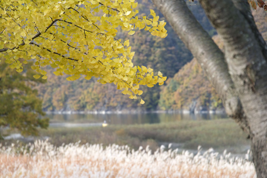 autumn landscape at Janggye Tourism Place in Okcheon, Chungbuk, South Korea Autumn Janggye Okcheon Riverside Autumn Beauty In Nature Branch Close-up Day Flower Focus On Foreground Freshness Grass Growth Landscape Nature No People Outdoors River Scenics Sky Tranquility Tree Tree Trunk Water