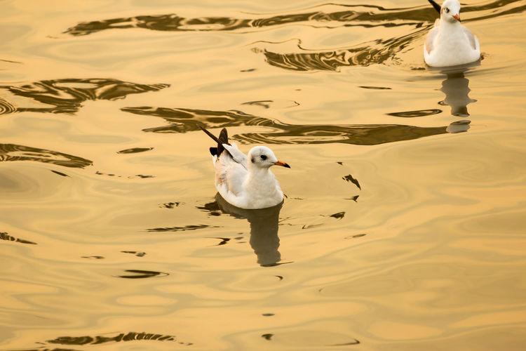 The gulls birds at Bangpoo Samutprakan Thailand Thailand Bangpoo Bird Gulls Beautiful Sea Nature Samutprakarn In Thailand Swamp Outdoors Beach Birds Backgrounds Animal Wild Tern Widerness Fast Migratory