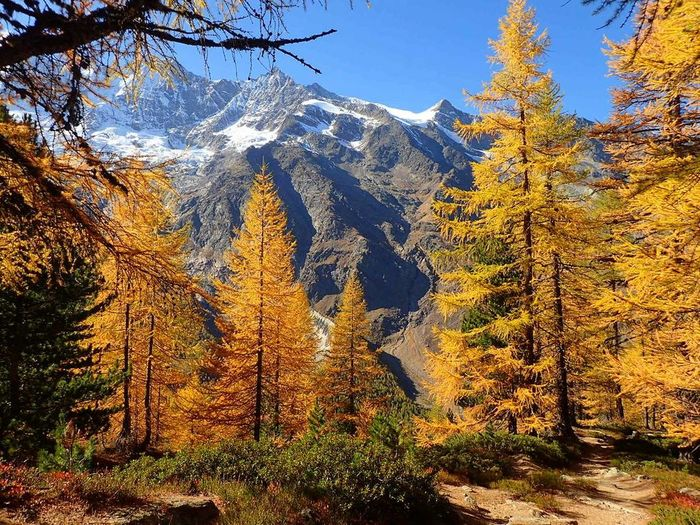 autumn colors Saasfee Switzerland Switzerlandpictures Switzerland Alps Autumn Autumncolors Allyeardestination Holiday Destination No People Day