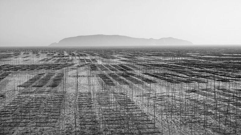 Farm seaweeds B&w Agriculture Landscape Mudflat Economy