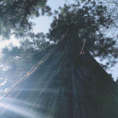 Tree Day No