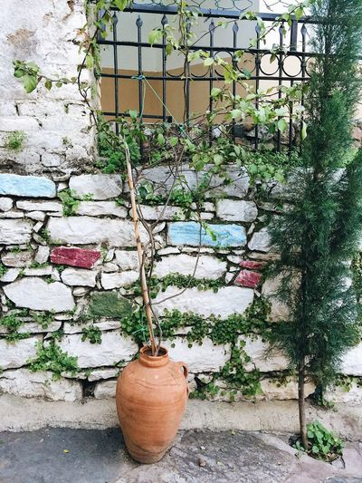 Bodrum Green Iron Gate Turkey Architecture Building Exterior Built Structure Cage Close-up Day Decoration Growth History Iron Cage Nature No People Outdoors Plant Potted Plant Tree Turky