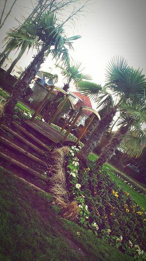 Photo's' folie Eau Photo Soleil Photooftheday Photos Populaires Photo♡ Photography Photogrid Foret Parck Herbes Sabledoré Mer Sable 🌴 Palmiers 🌴👣 Chaussures  Dj Mixer Dj Life Couple <3 Couples❤❤❤ Swimming