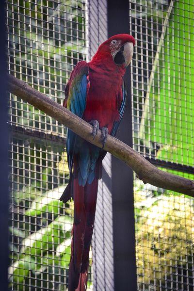 Polly wanna cracker... Parrot Lover