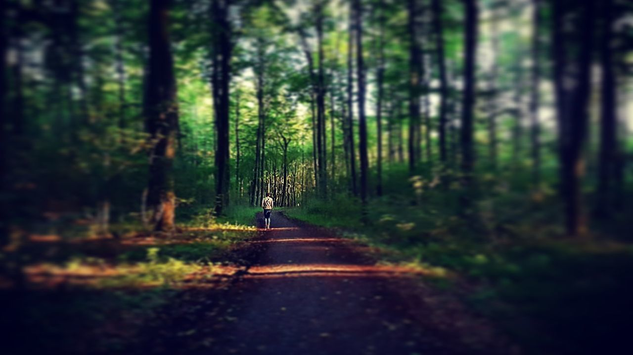 the way forward, nature, tranquility, forest, tree, road, tranquil scene, beauty in nature, day, tree trunk, growth, no people, scenics, outdoors, grass, tilt-shift, animal themes
