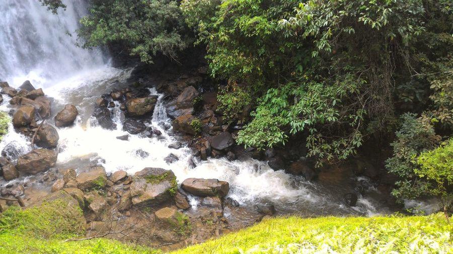 Water splashing on rocks against trees
