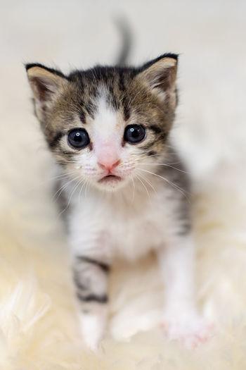 Kittens Cats Frisky Gray And White Kitten Kitten In Basket Kittens Of Eyeem Playful Kitten Tabby Cat