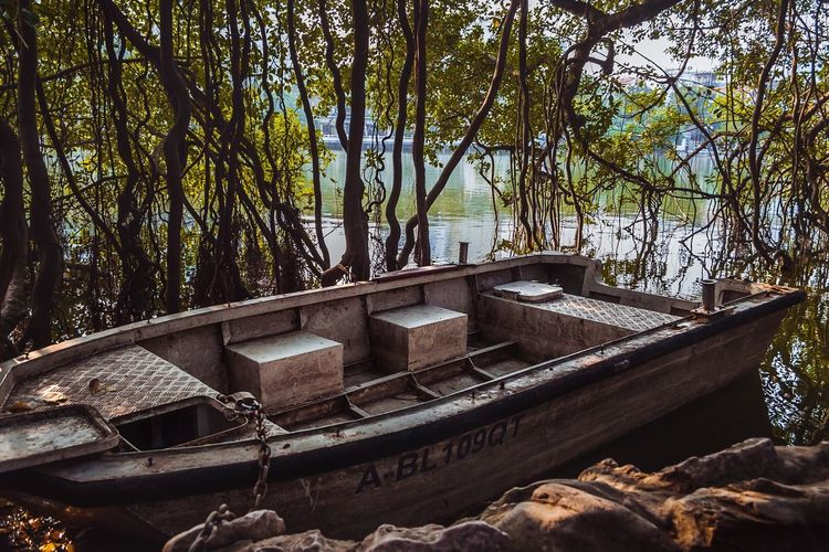 Tree Water Nature Day No People Outdoors River Growth Beauty In Nature Nautical Vessel Watermill Boat Vietnam Lake Vines Tree Row Boat Old Hanoi ASIA