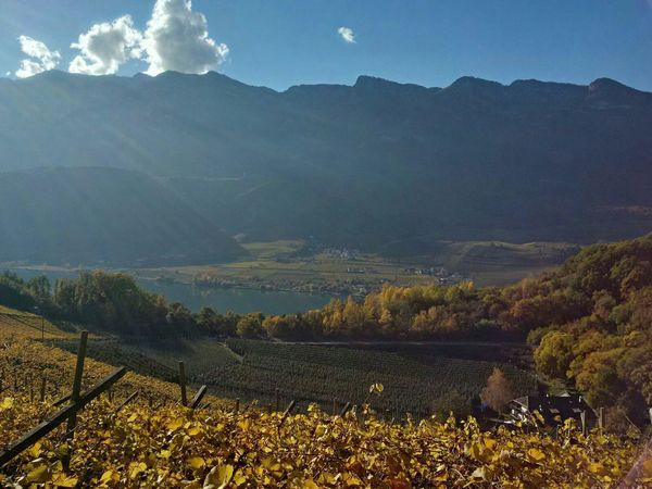 Südtirol Kaltern Autumn Alto Adige Caldaro Weinstraße