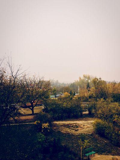 #jesienpolskazłota Sky Plant Tree Clear Sky Nature Copy Space Day