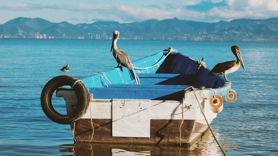 Birds perching on boat in sea against mountains