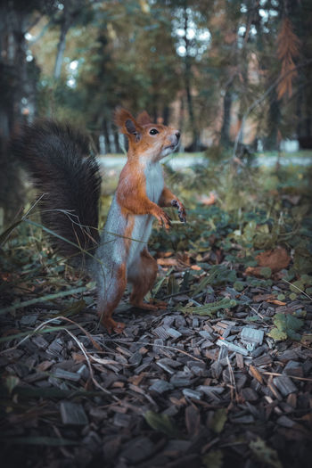 Close-up of squirrel in forest