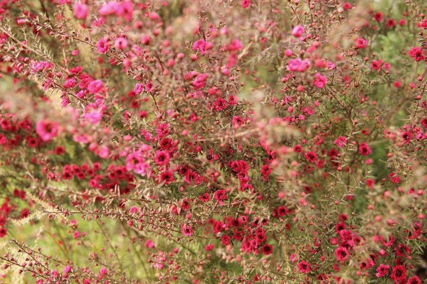 Pink poetry | Awaji Yumebutai| Flower Nature Pink Color Freshness Beauty In Nature Growth Close-up Garden Abstract Plant Flowers Traveling Awaji Island Japan|