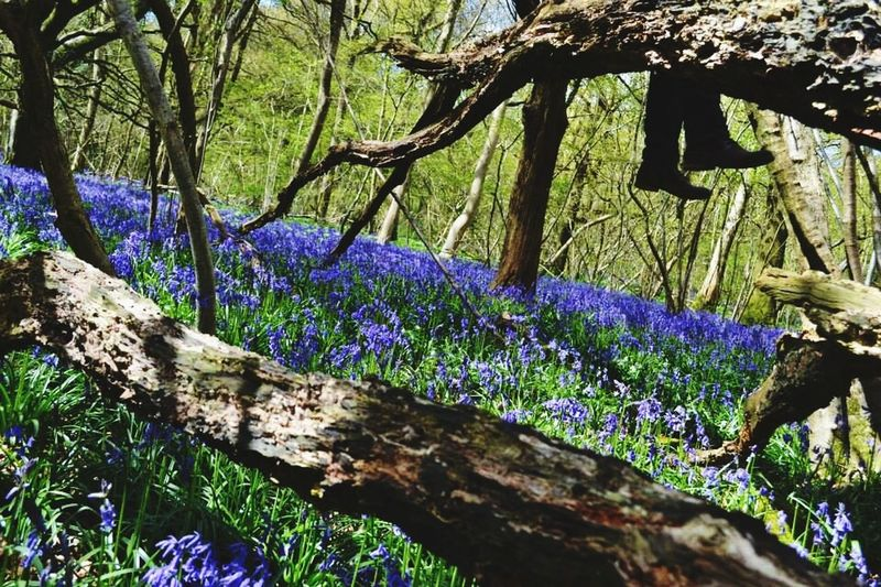 Bluebell Woods Bluebells Boots Nature Photography