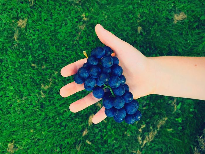 Cropped hand of person holding grapes against grassy field