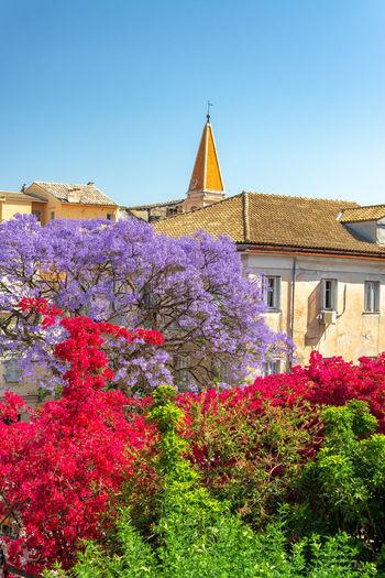 Purple flowering plants by building against clear sky