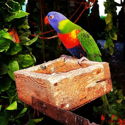 Colorful Parrot Birds Africa park open natural zoo alexandria egypt