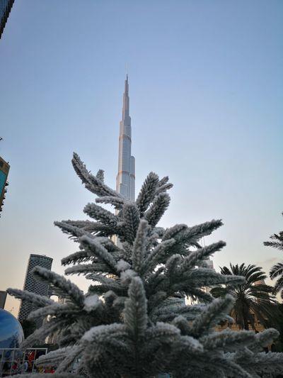 Tree Winter Cold Temperature Snow Sky