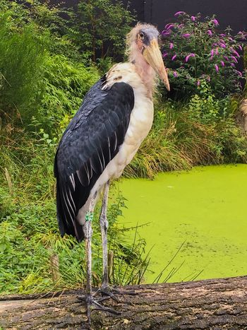 Bird Animal Themes One Animal Animals In The Wild No People Day Nature Outdoors Close-up Zoo Bigbird