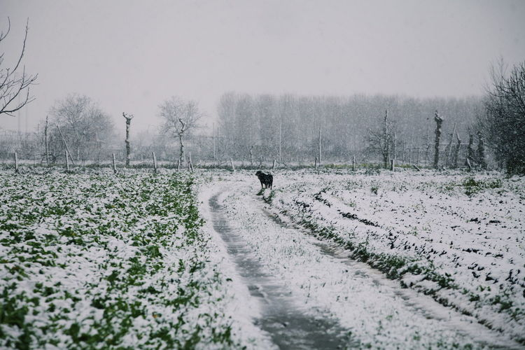 Landascape Travel Bare Tree Beauty In Nature Cold Temperature Day Field Full Length Landscape Men Nature One Person Outdoors People Photigraphy Photography Real People Scenics Sky Snow The Way Forward Tree Walking Weather Winter