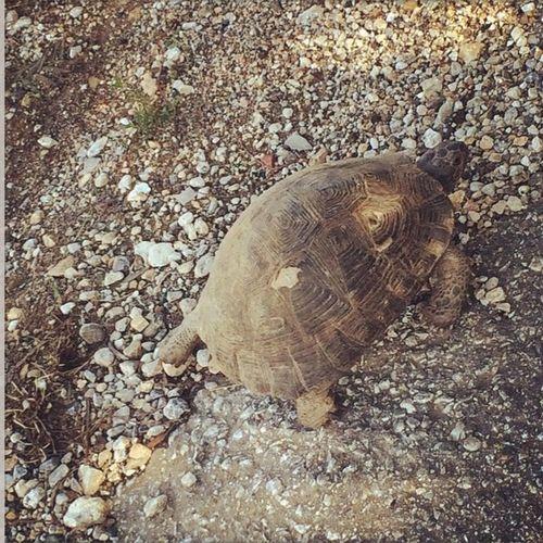 Pets Corner Turtle Kaplumbaga Yol Road