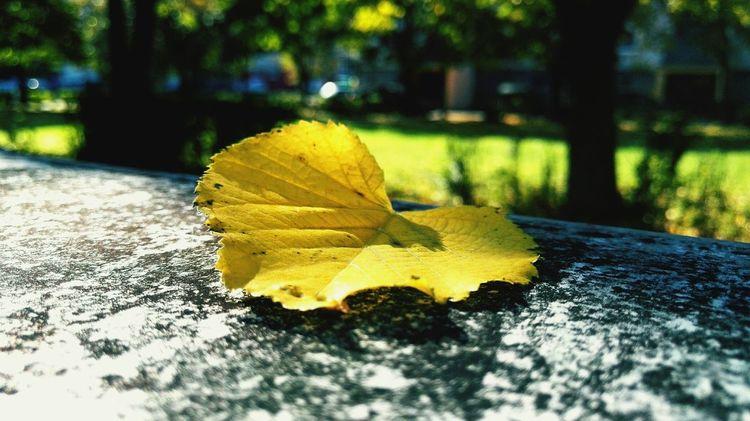 Fall Leaves Heart Leaves Autumn Colors Autumn Leaves