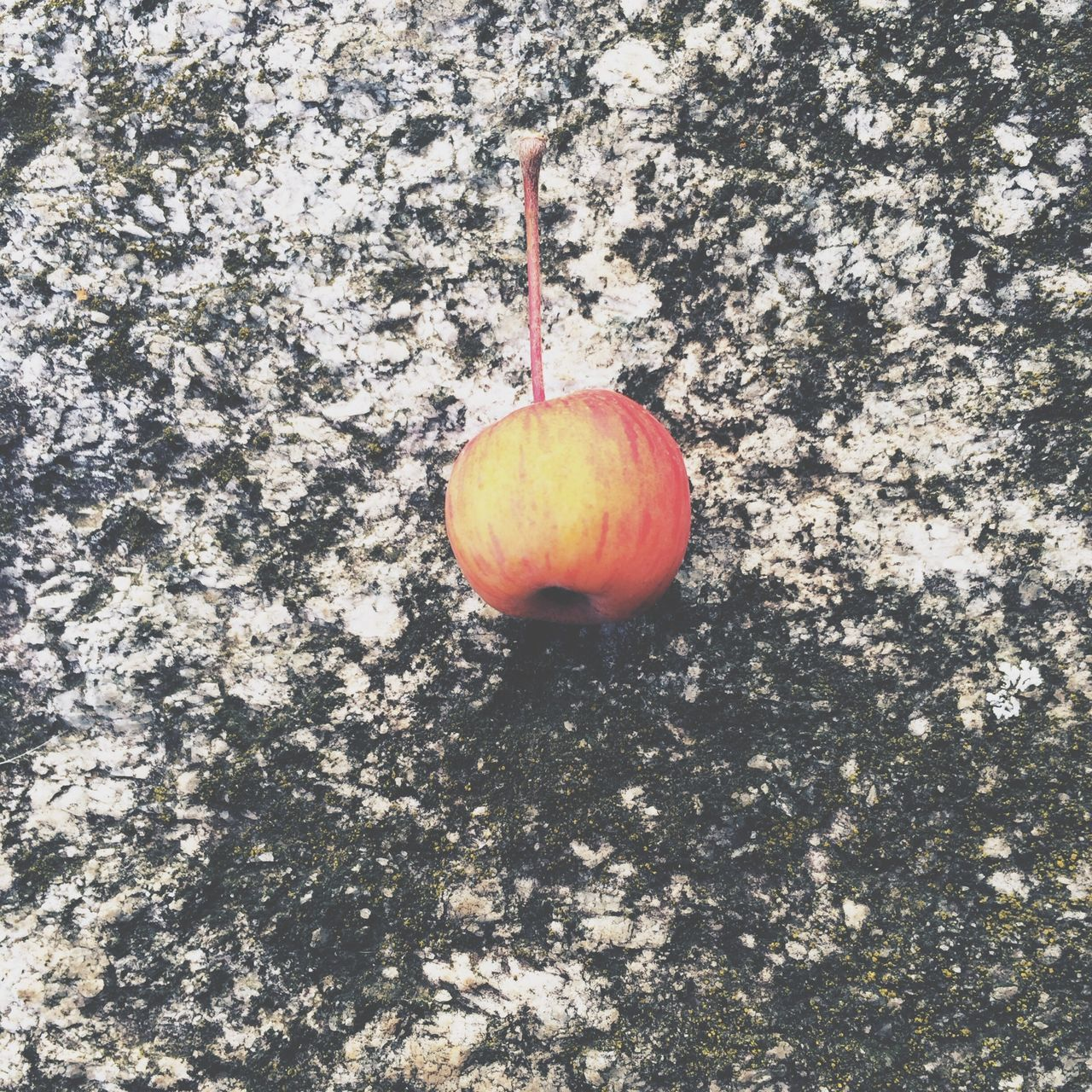 Close-up of apple on ground
