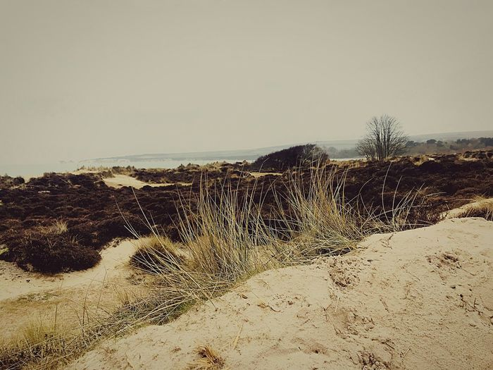 Sky Land Beach Sea Water Nature Sand Tranquility Motion First Eyeem Photo