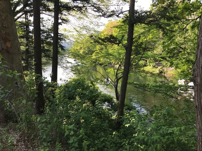 First Eyeem Photo EyeEmNewHere River Tree Water Nature Inokashira Park