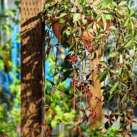 Nature Nature_collection Flowers,Plants & Garden Autumn Colors 花と庭