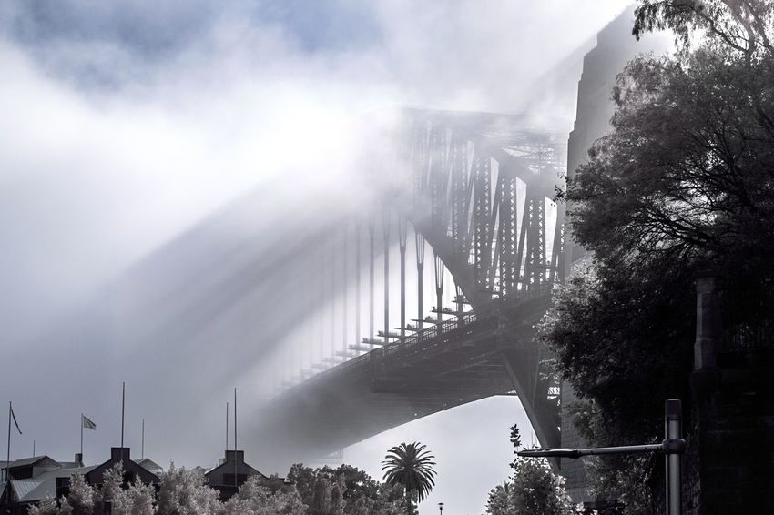 Architecture Built Structure City Life Dramatic Angles Fog Foggy Morning Harbour Bridge Infrared Photography Outdoors Shadows & Lights Sunlight Sydney Harbour Bridge Sydney, Australia Sydneylocal Travel Destinations Tree Break The Mold.