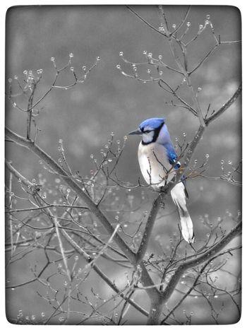 Blue Birds Nature Trees Colors Blackandwhite EyeEm Best Shots EyeEmBestPics