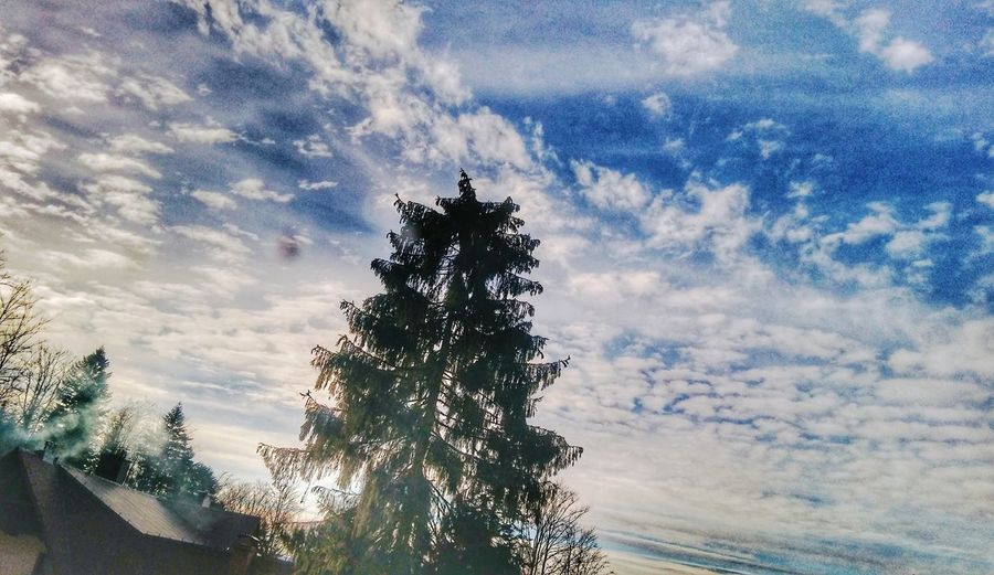 Low angle view of silhouette tree against sky