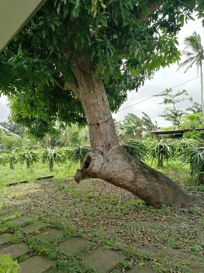 Tree Reptile Branch Green Color