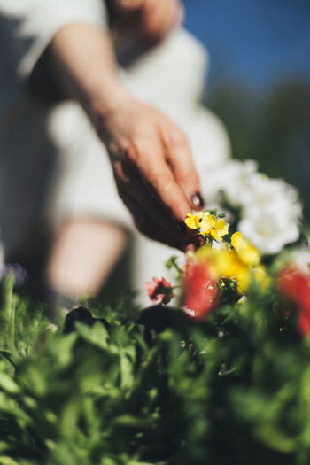 Close-up of woman touching flowering plant